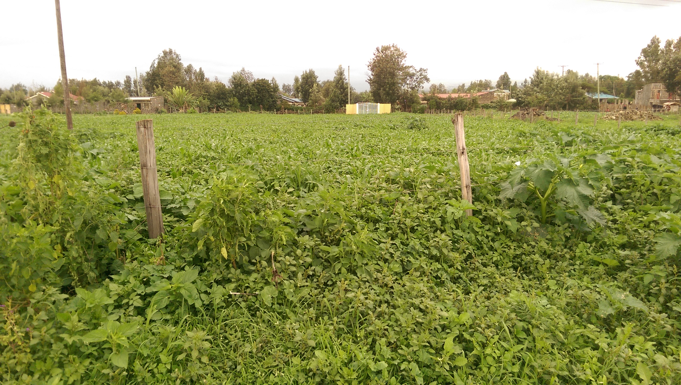 1/8 plots for sale in sunrise estate Njoro, 600mts from ...