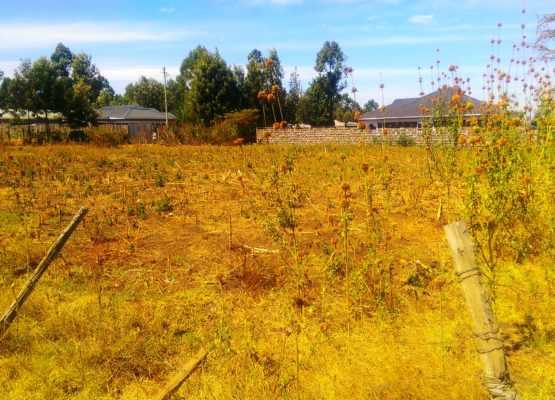 1/4 plot for sale 50mts from tarmac in Ngata, Nakuru