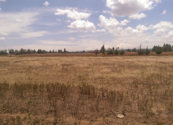 3 acres for sale at Mangu center,Kabarak